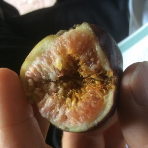 Picture of a half-eaten fig